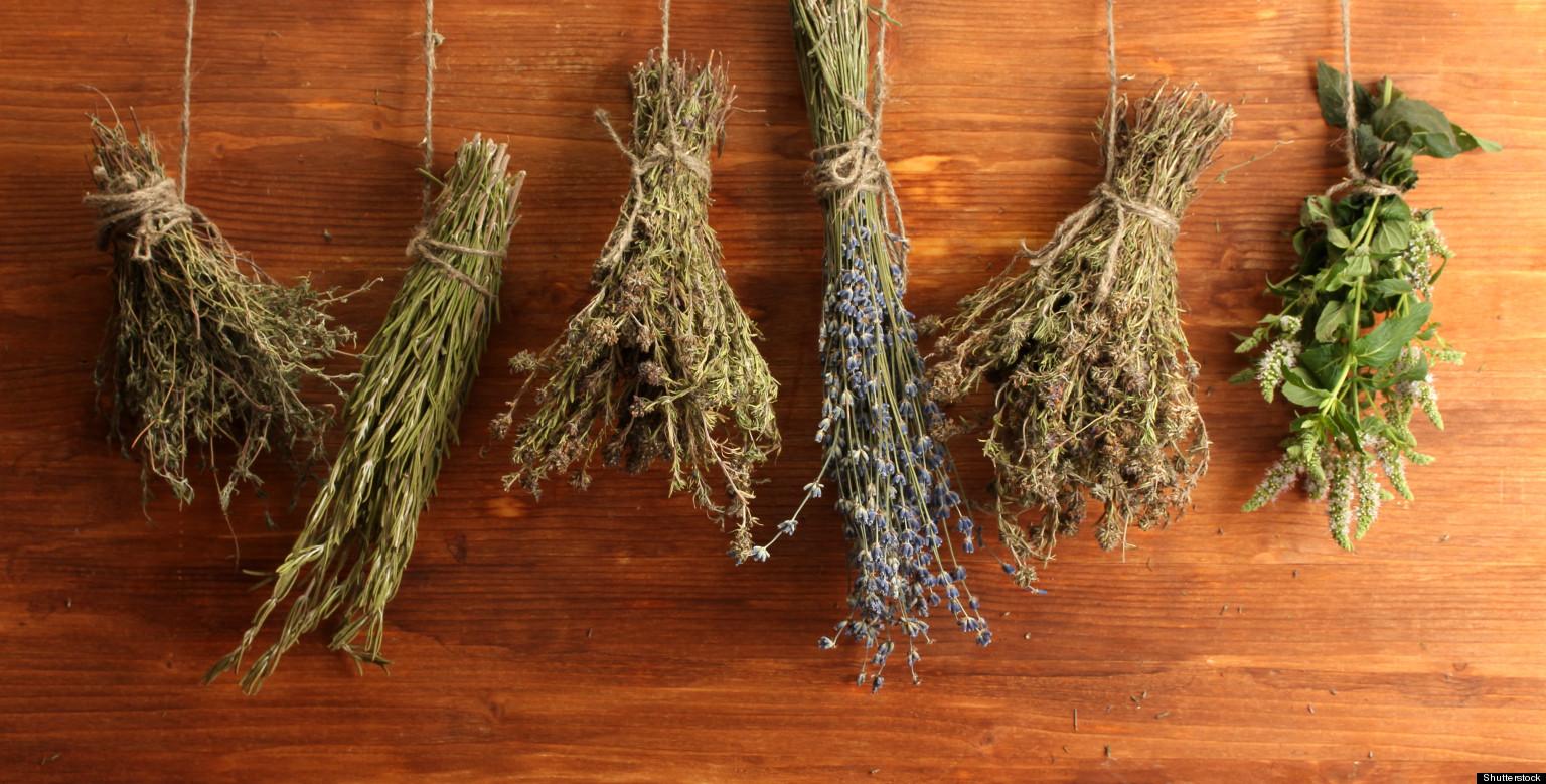 лечебные травы от паразитов в организме