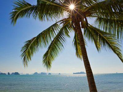 пальма, море, солнце, песок