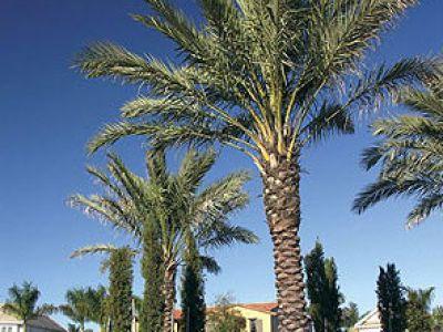 пальма дома