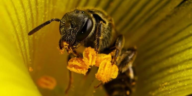 О пользе цветочной пыльцы