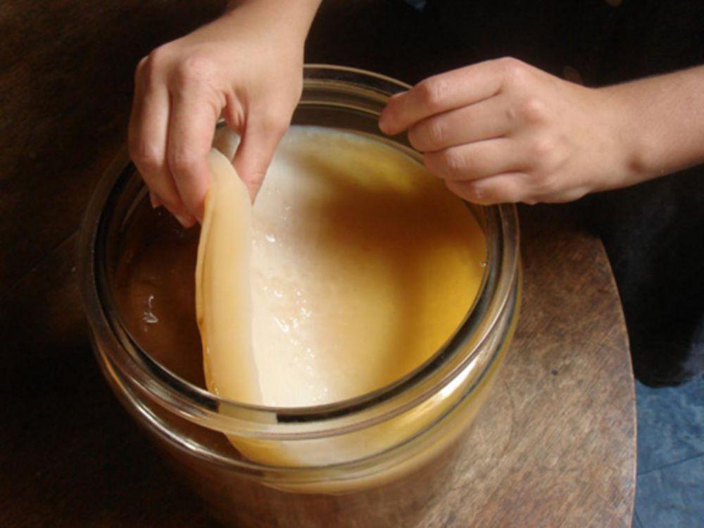 Инструкция на чайный гриб