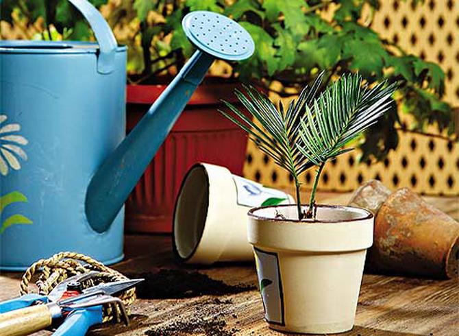 Инвентарь для ухода за комнатными растениями
