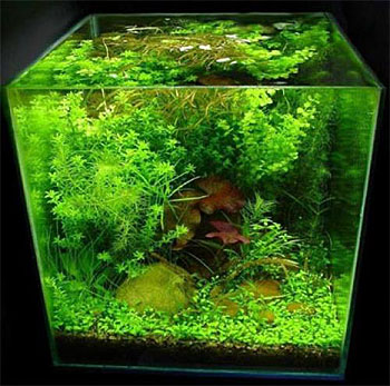 Фото интерьер аквариума
