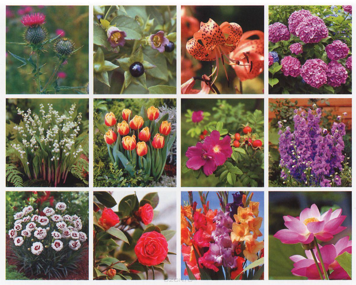 Домашние цветы по гороскопу и их фото