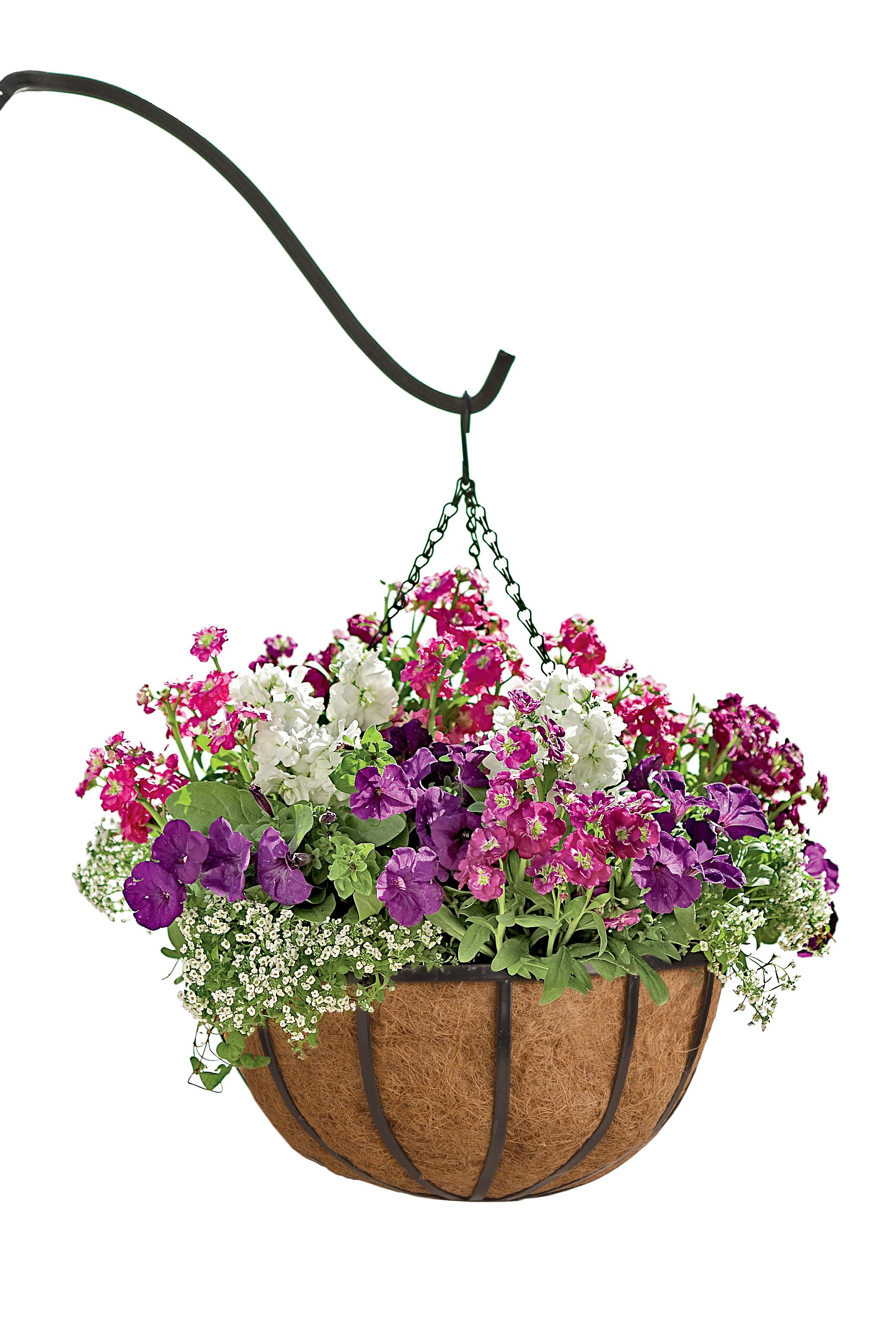 Цветы для висячих кашпо