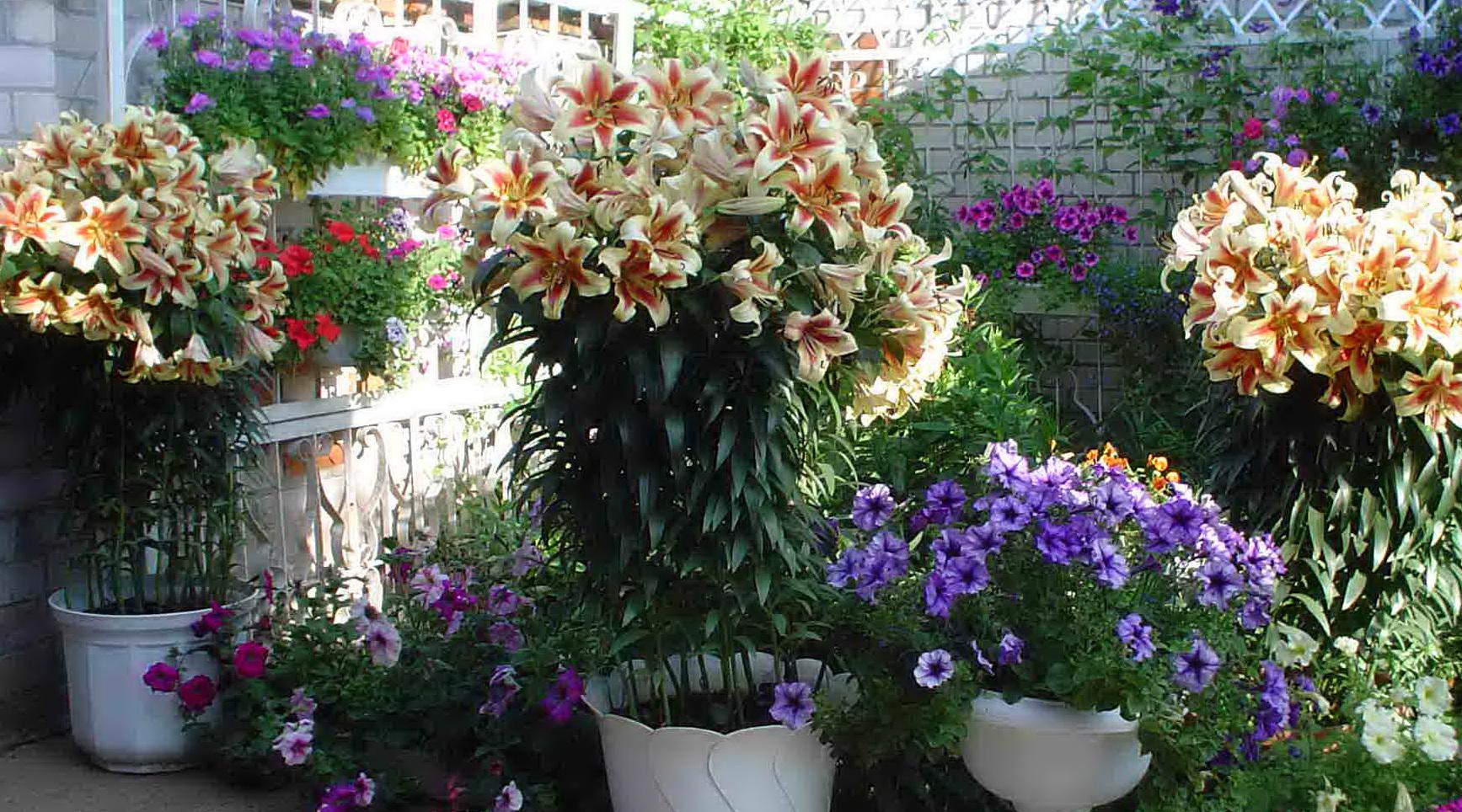 Какие цветы можно сажать в августе и сентябре 22