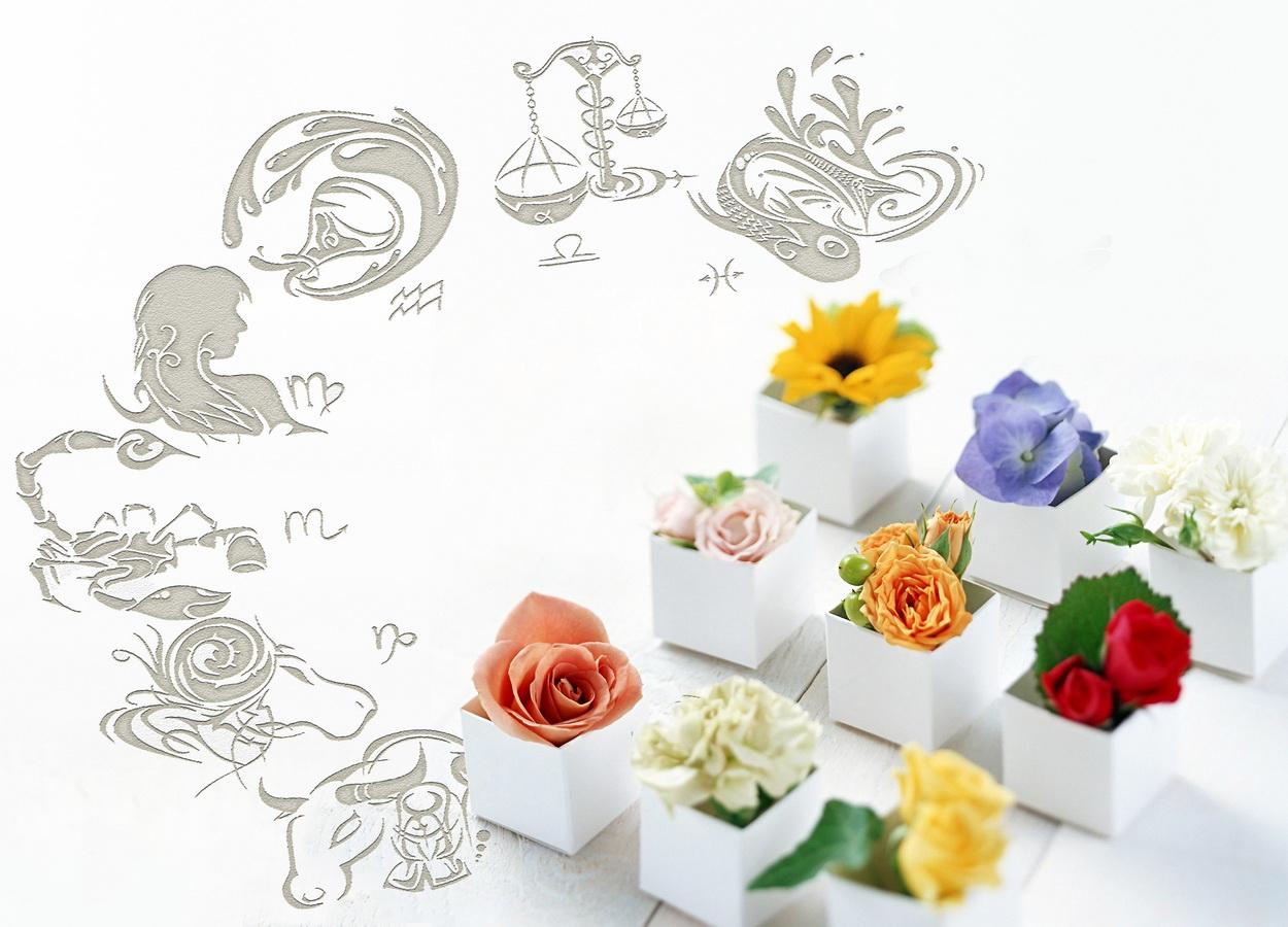 Знаки зодиака из цветов фото