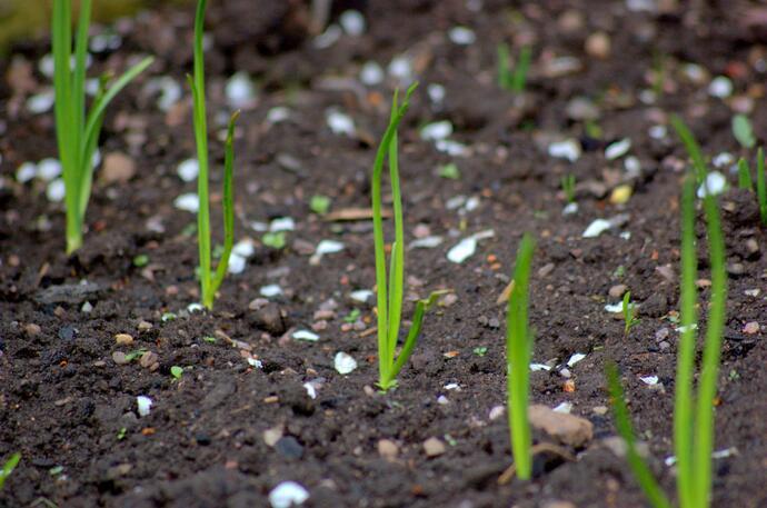 посев семян в феврале