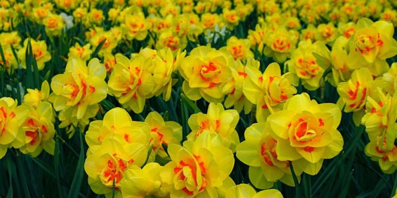 Выращивание петуний: фото, видео посадки цветов 51