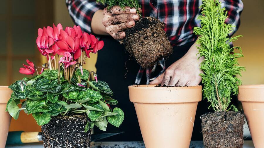 Выращивание цветов дома это