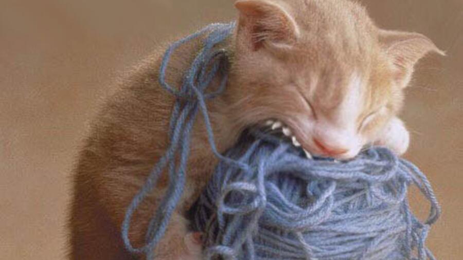 Прикольные картинки про вязание, виде легких